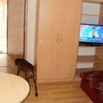 Pokój większy z psem Maksem